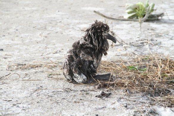 ave muerte contaminacion