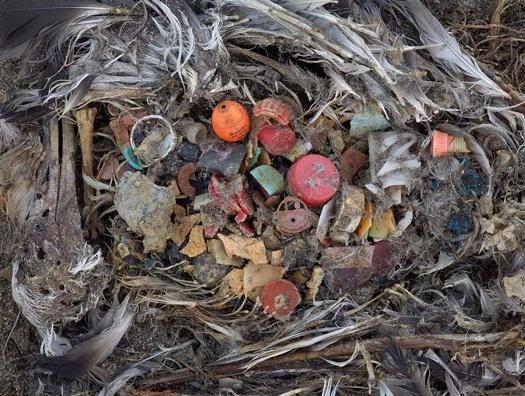 ave muerte plastico