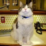 El gato Óscar que predice la muerte