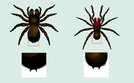 hileras araña