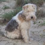 Crítica sobre el veterinario de la Avenida del Puerto en Valencia