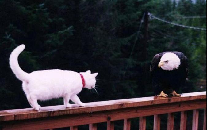 animales graciosos gato aguila