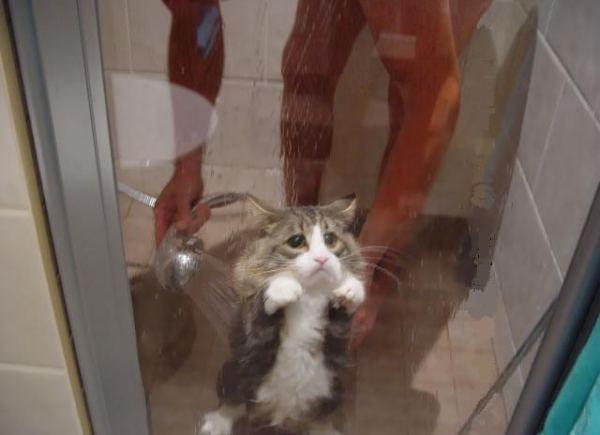 animales graciosos gato ducha