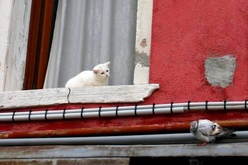 animales graciosos gato paloma