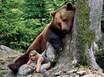 animales graciosos oso miron