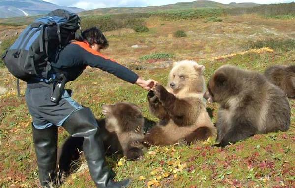 animales graciosos oso