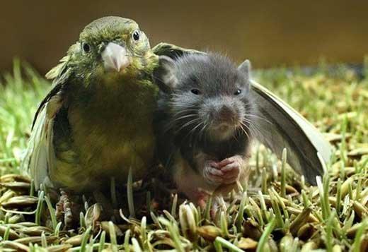 animales graciosos pajaro raton