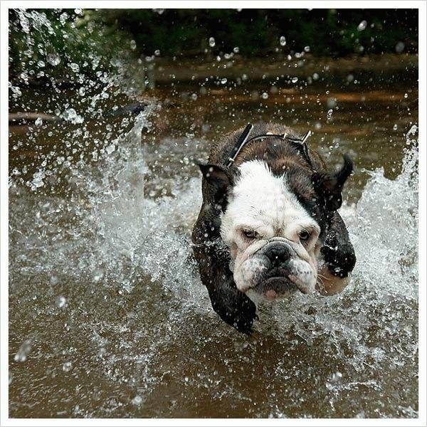 animales graciosos perro agua