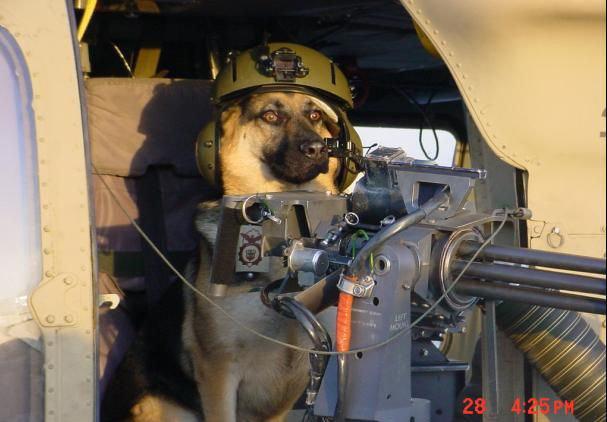 animales graciosos perro militar