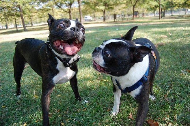 animales graciosos perros pelando