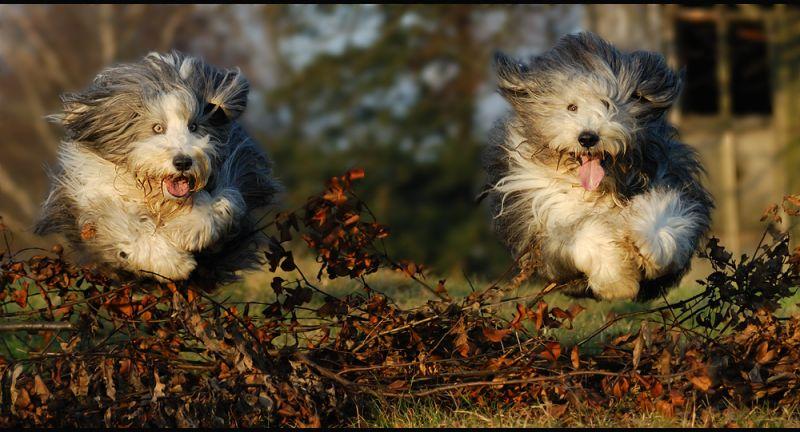 animales graciosos perros