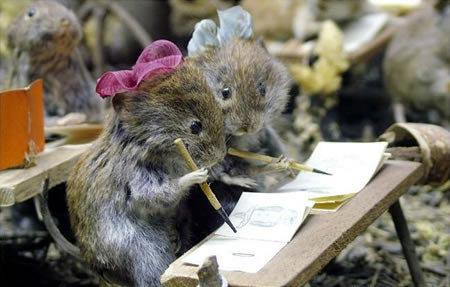 animales graciosos ratones escuela