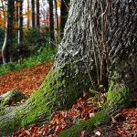 Adivina la pregunta 519: Lógica y matemáticas - El árbol mágico