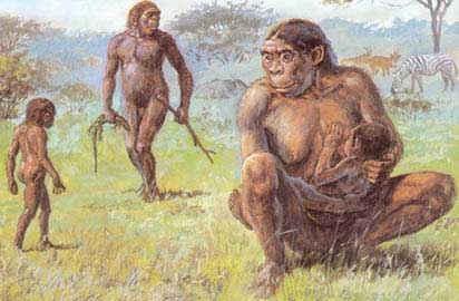 eva mitocondrial hominidos