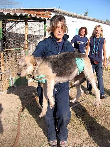 maltrato animales el refugio