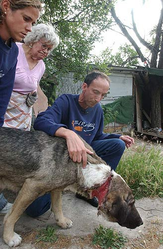 maltrato animales perro mastin