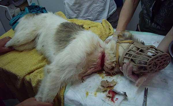maltrato animales perro