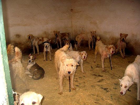maltrato animales perros caza