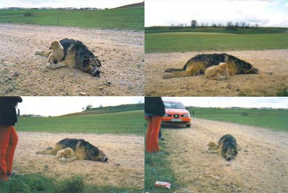 maltrato animales perros