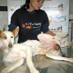 Las crónicas de Morbo: maltrato a los animales