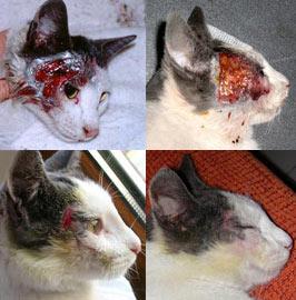maltrato gatos