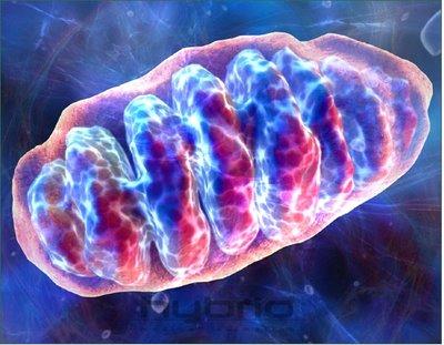 mitocondria grafico