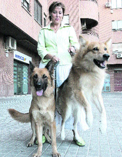 mujer perros