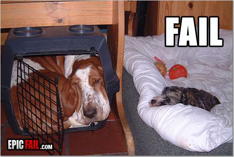 fail jaula perros