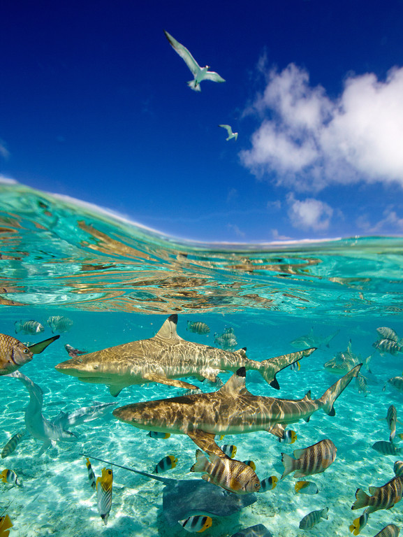 foto submarina laguna bora bora polinesia francesa