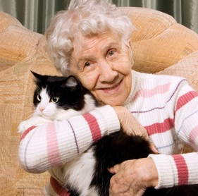 The grandmother with a cat on a sofa