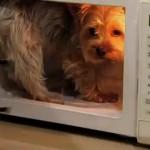 Truco de magia teletransportador de perros