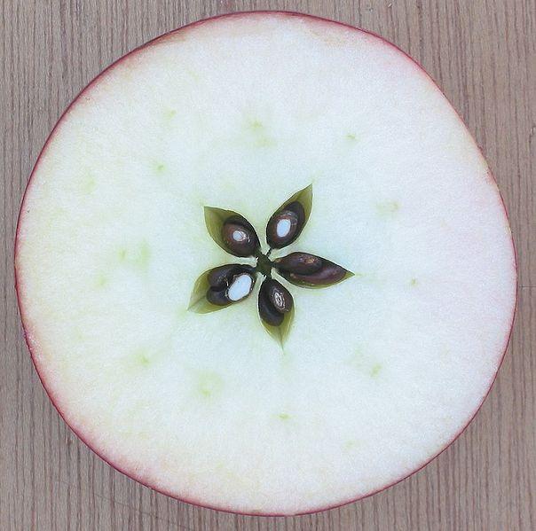 manzana pentagrama