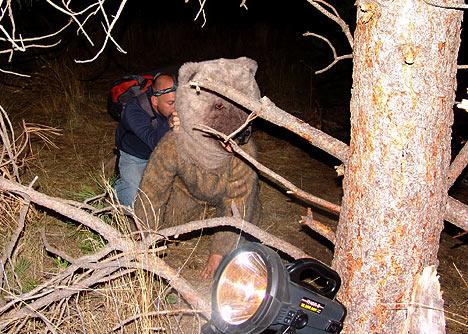 ultimo superviviente oso falso