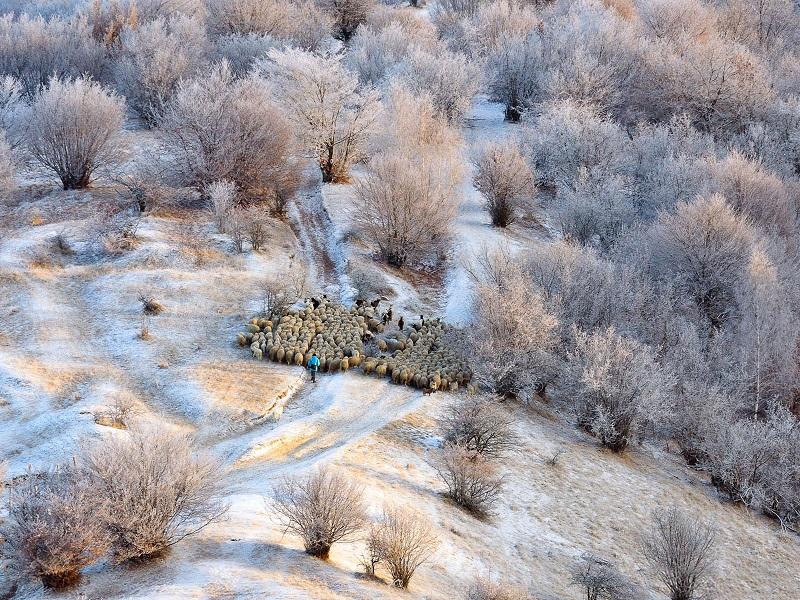 Pastor rebano ovejas invierno Rumania