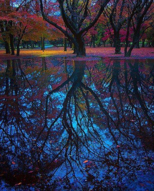 reflejos arboles rio tokio