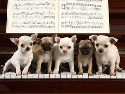perro musico