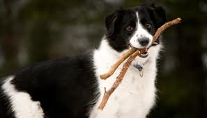 perro palo