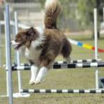 Juego con carrera de vallas