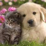 Juego de perros y gatos