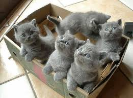 gatitos