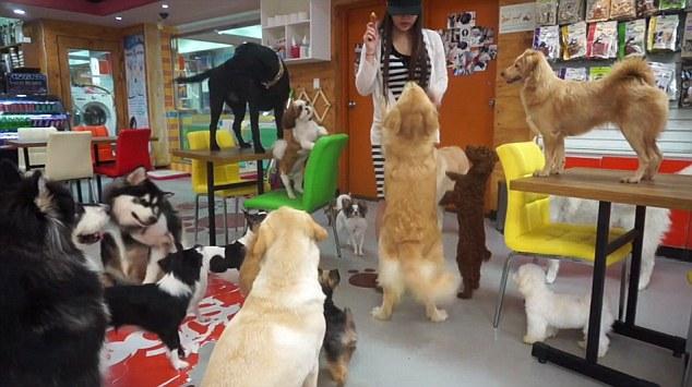 cafeteria perros