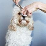 Juego de lavar y cortar el pelo a perros