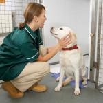 Juego de cuidar perros