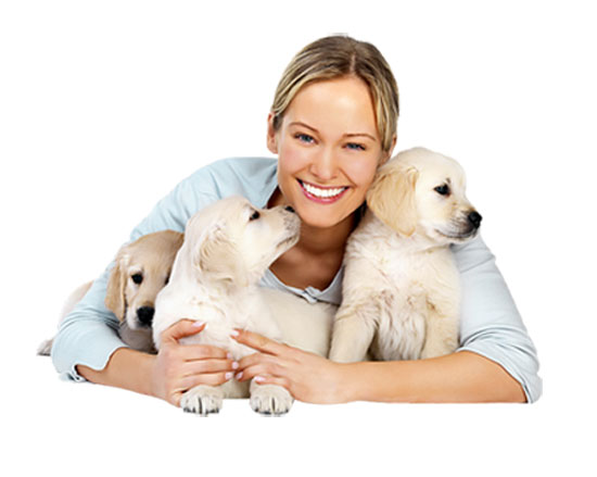 cuidar perros