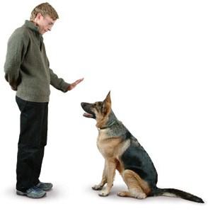 dar instrucciones perro