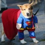 Juego de disfraces para perros