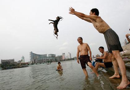 lanzar perro