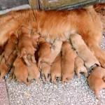 Cuidar a la mamá perro y sus cachorros