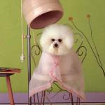 Juego de peluqueria para perros y gatos