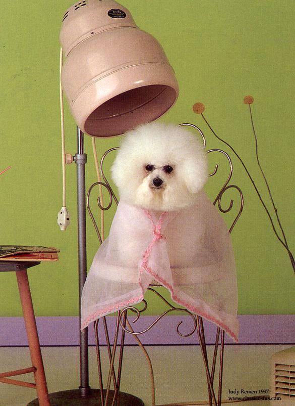 peluqueria perros